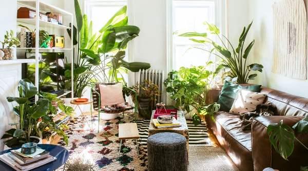 Arredare casa con le piante comporta vantaggi anche per la salute.